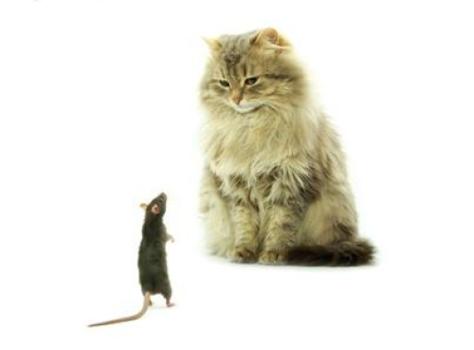 CAT RAT 2