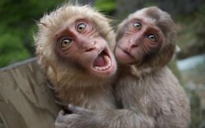 Monkey-Monday-1